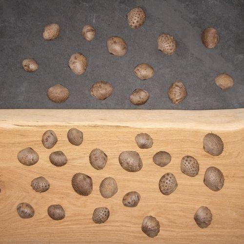 duurzame schelpen van boven op hout en steen